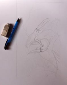 Toucans, dessin initial, crayon, de Lise Lalève